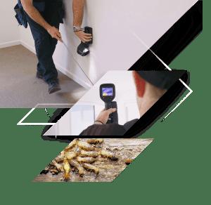 Brisbane Termite Inspection