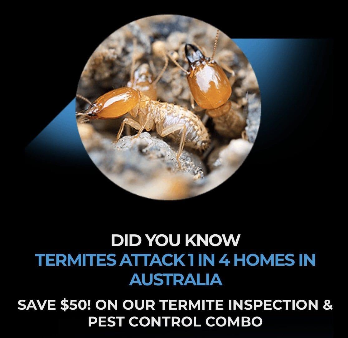 Termite Voucher Brisbane