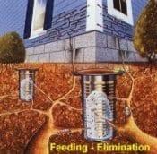 Termite Baiting Elimination