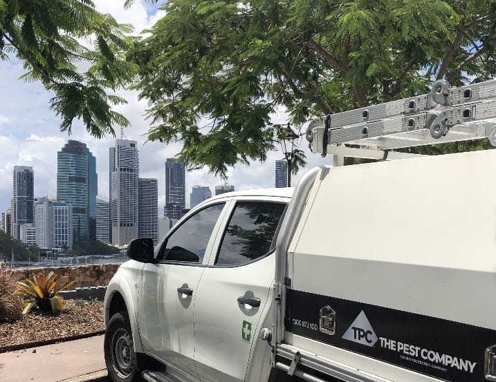 Brisbane City Pest Services